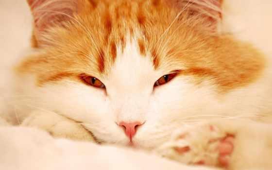 кот, рыжий Фон № 6322 разрешение 1920x1200