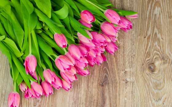 тюльпаны, розовые, цветы Фон № 37366 разрешение 2560x1600