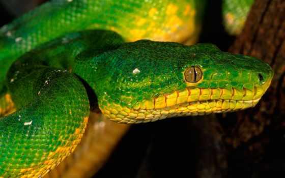 snakes, snake, кб