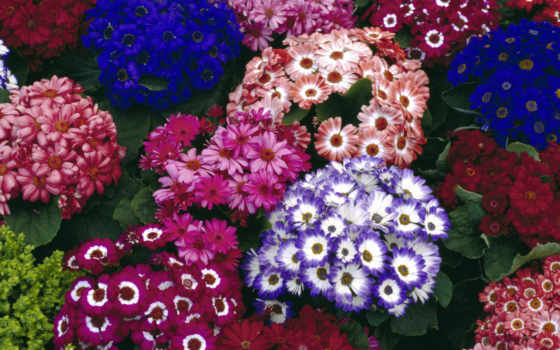 цветы, flowers, free Фон № 113911 разрешение 1920x1200