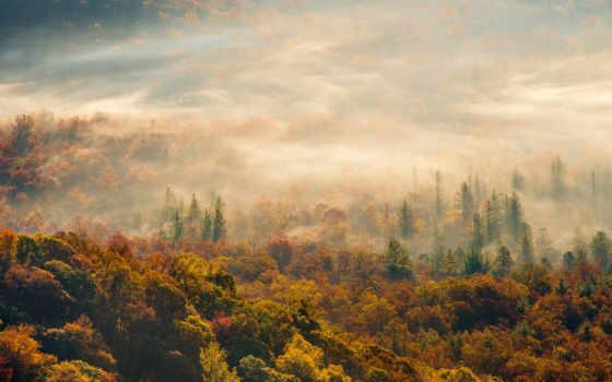 осень, утро, туман, iphone, лес, природа,