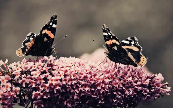 цветы, макро, две, бабочка, разных, цветке, крылья, бабочки,