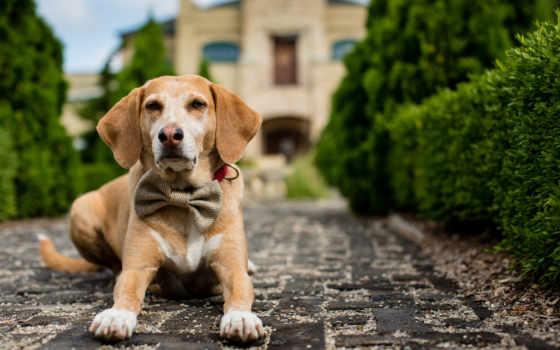 собаки, собака, собак, resident, злой, щенок, качественные, фотографий, zhivotnye, год, отзывы,