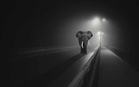 слон, black, фон, resolutions, desktop, images,
