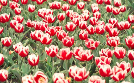 цветов, цветы, пазлы, share, goodnough, добавил, forrest, соберите, картинке,
