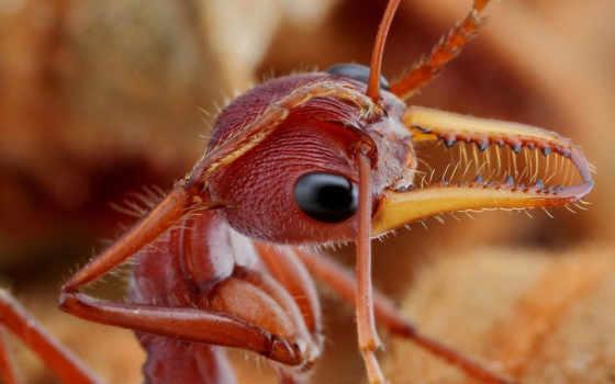 муровей, насекомые