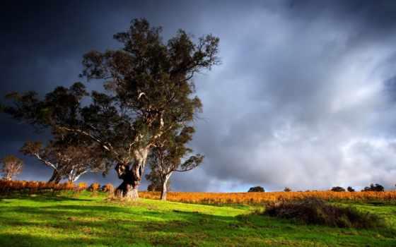 буря, природа, clouds, desktop, trees, best,