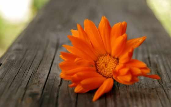 дерево, цветы, flowers, страница, природа, оранжевый, free, garden,