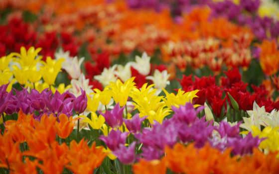 Цветы 25453