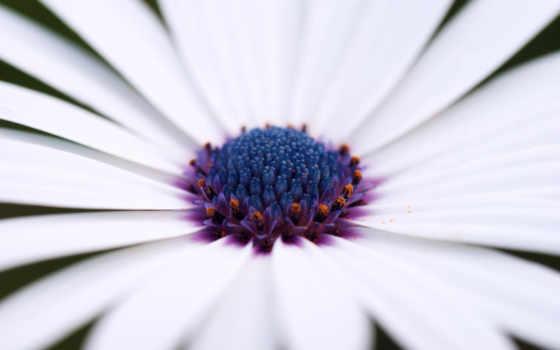 цветок, лепестки Фон № 26957 разрешение 1920x1200