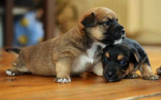 дом, собаки