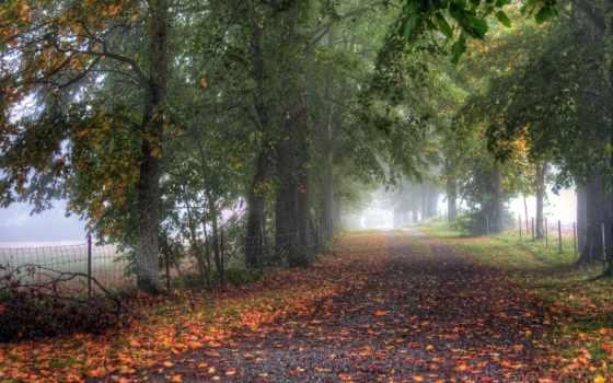 туман, деревья