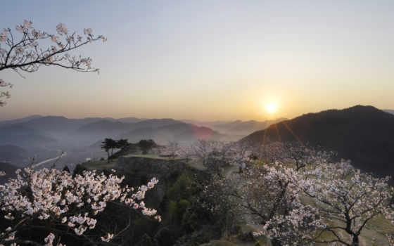 япония, Сакура, закат
