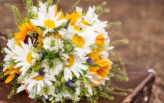 цветы, букеты, ромашки