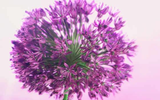 цветы, полевые, цветов