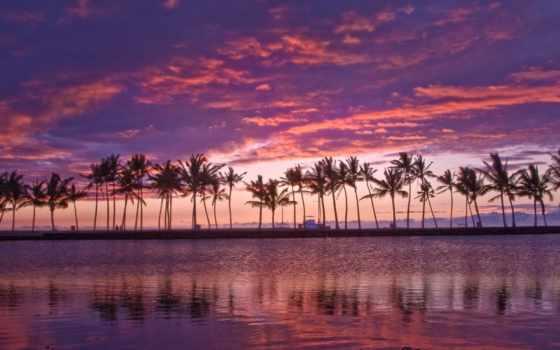 hawaii, сиреневый, like