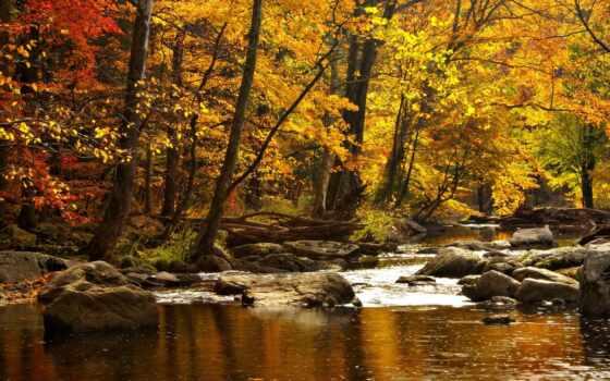 природа, осень, леса