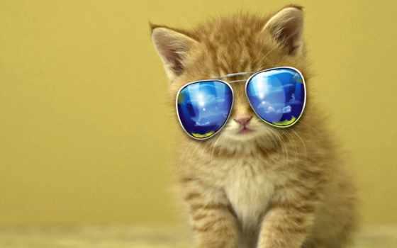 кот, cool, kedi, masaüstü, funny,
