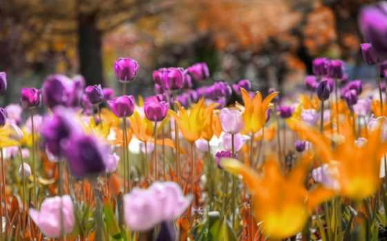 тюльпаны, flowers, cvety, fondos, many, trees, park, картинка, pantalla,