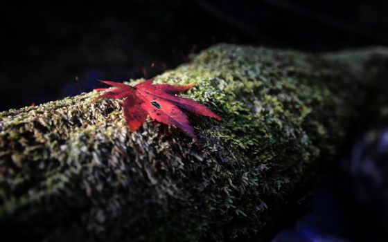 ночь, осень, самолеты, яndex, high, листва, maple, грустный,