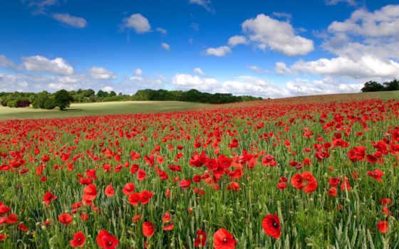 cvety, поле, природа, маки, небо, красные, oblaka, landscape,