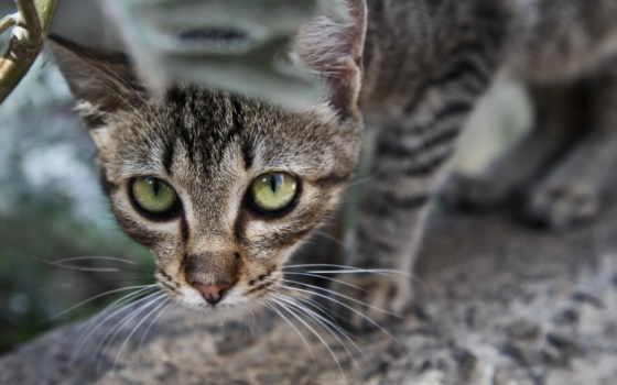 кот, cats, выглядывает