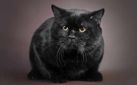 котоматрица, кот, черная, pin, pinterest, yorkies, кота, котовасия,