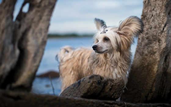 собака, moststi, white, mostbet, animal