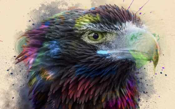 фокс, hawk, see, птица, animal, клюв, брызги, краска, купить