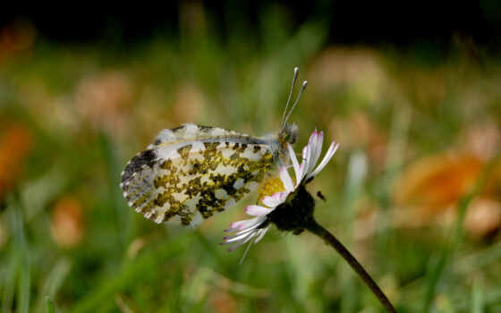 бабочка, вектор, цветы