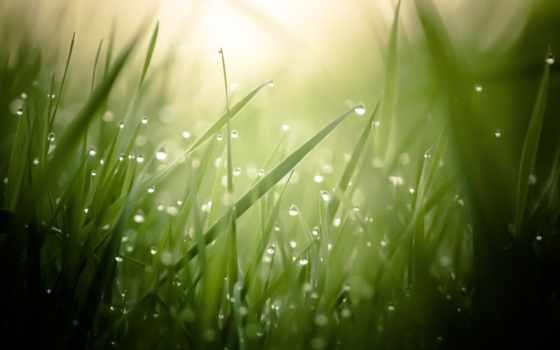 роса, трава, капли