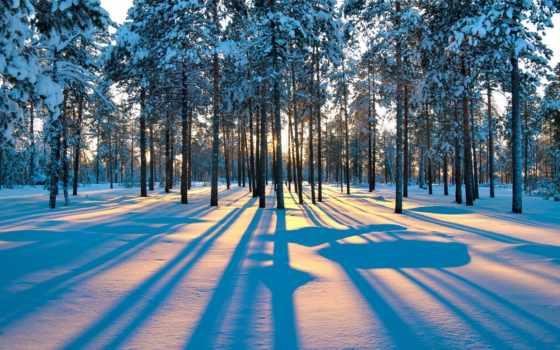 лес, winter, рассвет, crystal, коллекция, trees, зимние,