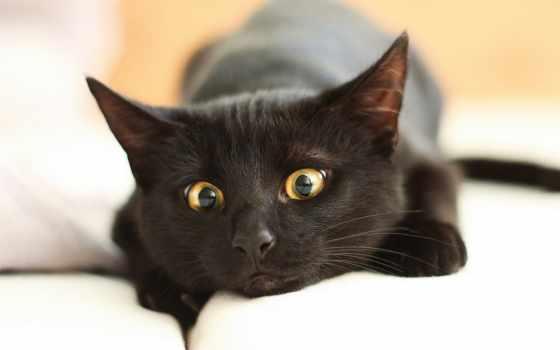 кот, black, лежит, разных, разрешениях, диване, четвероногие, друзья, бело, our,