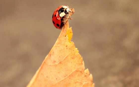 bug, lady, free, франция, осень, листья, пасть, und,