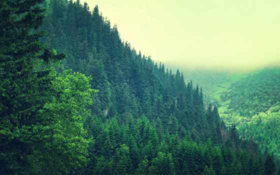 pine, лес, дерево, trees, amazing, природа, hills,
