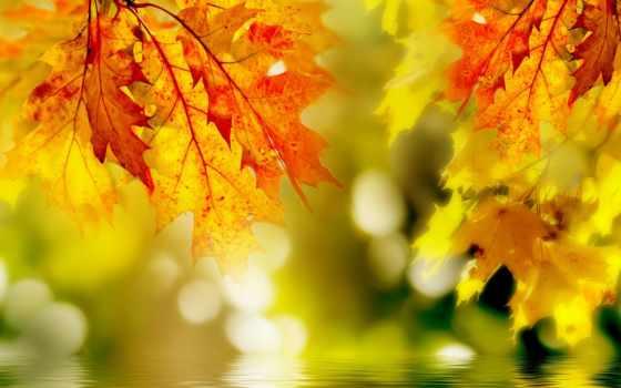 фотообои, pp, images, stock, photos, landscape, тополя, фреска, декор, осень, shutterstock,