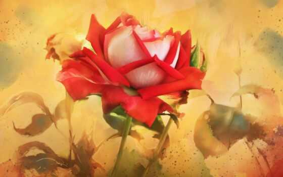 cvety, розы, рисованные, живопись, картинка, android, картинку,