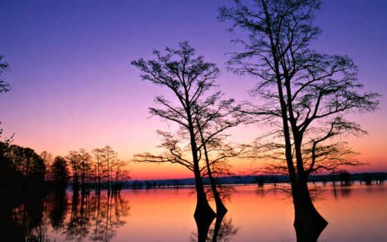 trees, закат, sfondi, palm, телефон, per, рассвет, alba, mobile