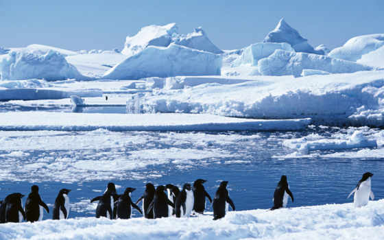 äï¼, eu, группа, пингвинов,