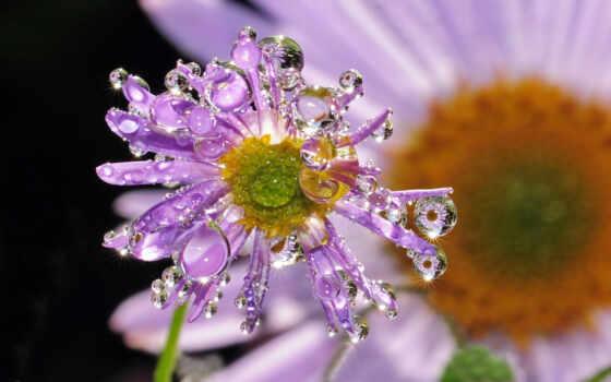 капли, цветок