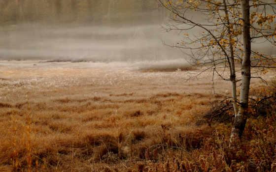 осень, поле, лес
