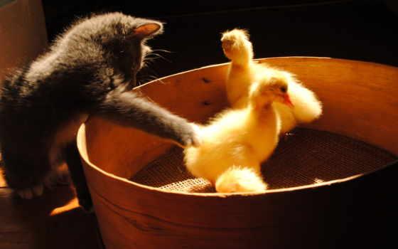 животные, кошки, категории