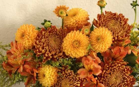 flowers, подборка, красивые