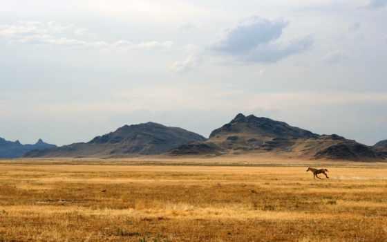 national, geographic, full, природа, горы, лошадь, mustang, широкоформатные,