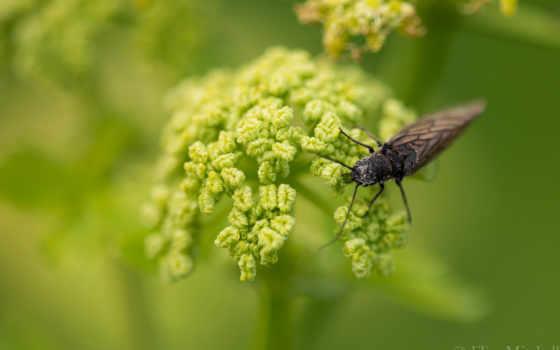 насекомые, коровки, божьи, cvety, герберы, картинку,