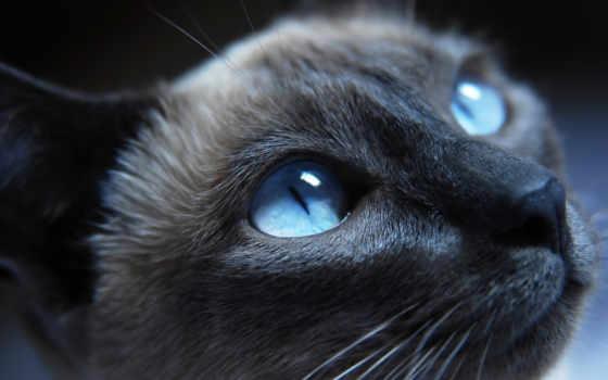 кошки, коты, кот, свет, красивые, wild,