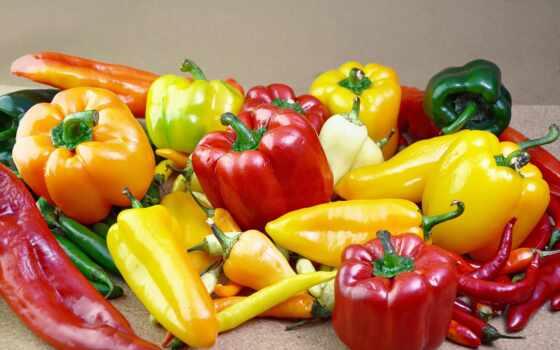 перец, bulgarian, интересно, сладкое, fact, сорт, human, взгляд, sale, выращивание