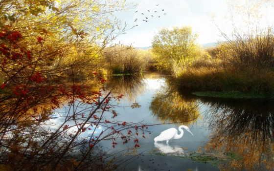 озеро, природа, скачать, картинка, other, resimleri, resim, می, doğa, haber, kozan, reflection,