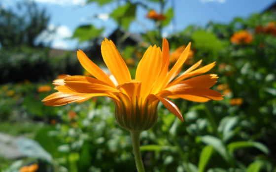 цветы, лето Фон № 26914 разрешение 2560x1600