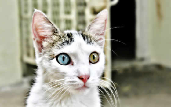 кот, глазами, глаза